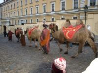 Velbloudi v uličkách staré Prahy