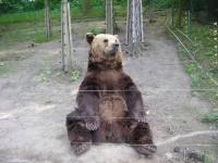 Medvědárium - Jakub, Matěj nebo Vojta?