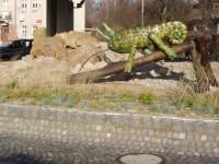 Karlovy Vary - okružní křižovatka s chameleonem