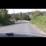 Pes přes cestu