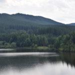 Lesy ČR nabízí k pronájmu oboru a 19 honiteb